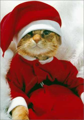 Pussy cat santa