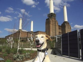 battersea-dogs homepic