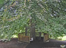 Coole park tree